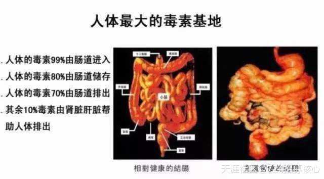 【肠道健康知识】 3.0吉悠片剂 对肠道有什么作用<strong>肠道</strong>?