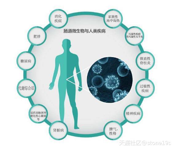 人体自身免疫系统与肠道菌群畅森态存在着互相影响的关系