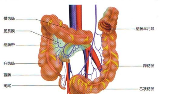 什么叫结肠炎?