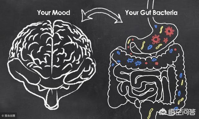 """为什么说""""肠道健康会影响人的情绪""""?"""