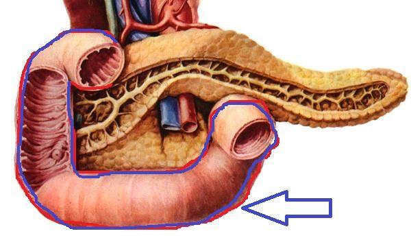 十二指肠炎有哪些症状<strong>十二指肠</strong>?