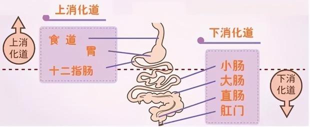 十二指肠溃疡怎么办呢?
