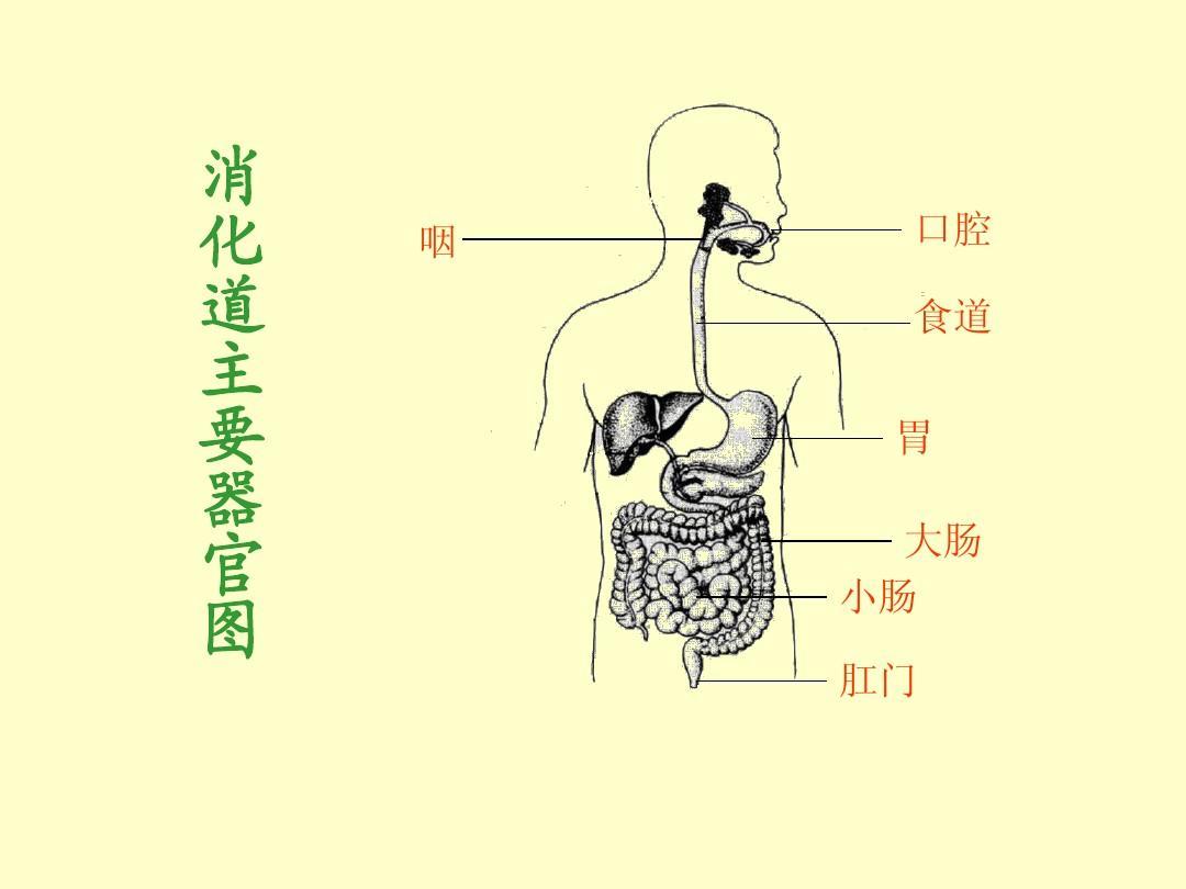 肠胃消化怎样判断自己肠胃不好