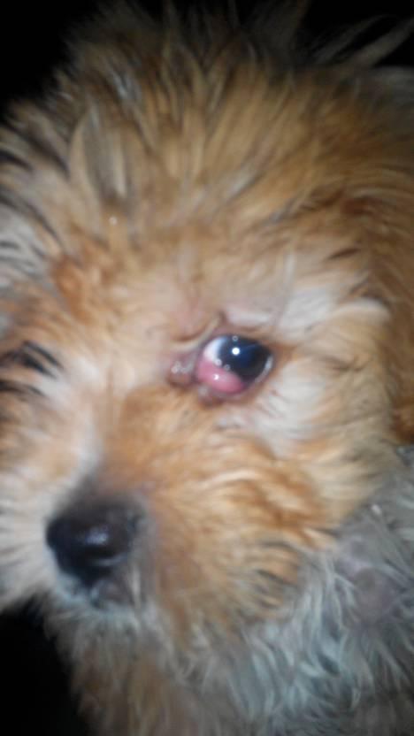 狗狗吐了黄黄粘稠液体,狗狗肠胃炎